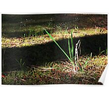Grass in the forest Poster