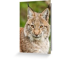 Young Lynx Portrait Greeting Card