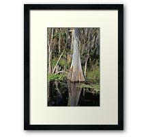 Cypress Beauty Framed Print