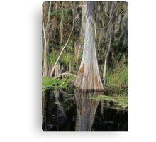 Cypress Beauty Canvas Print