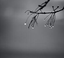 autumn 2 by Jacek Nazim