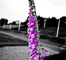 Purple Selective Colour by Elowrey