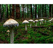 March Of The Fairy Ring Photographic Print