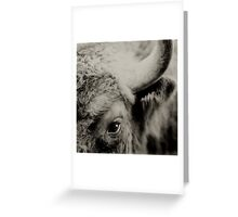 Bisons look Greeting Card