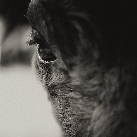 Bisons look by kavolis