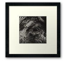 Bisons look Framed Print