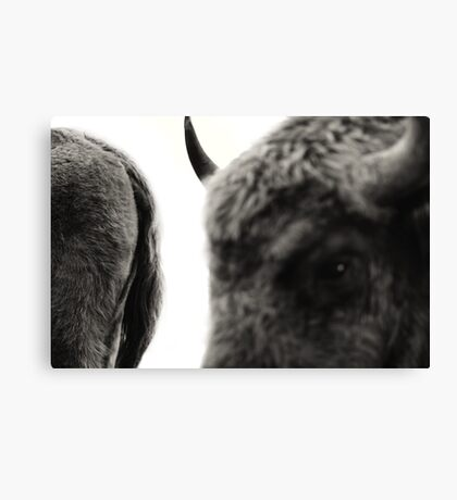 she is mine Canvas Print