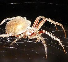 Resting Spider in the Night by LittleCsDesigns