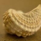 Shell of My Dreams by Lynn Gedeon