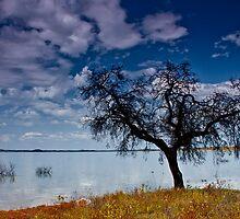 Paradise by Filomena  Francisco