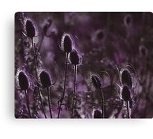 There is always colour......  Canvas Print