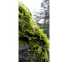 Mossy Rock Photographic Print
