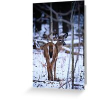 First Snow of the Winter Greeting Card