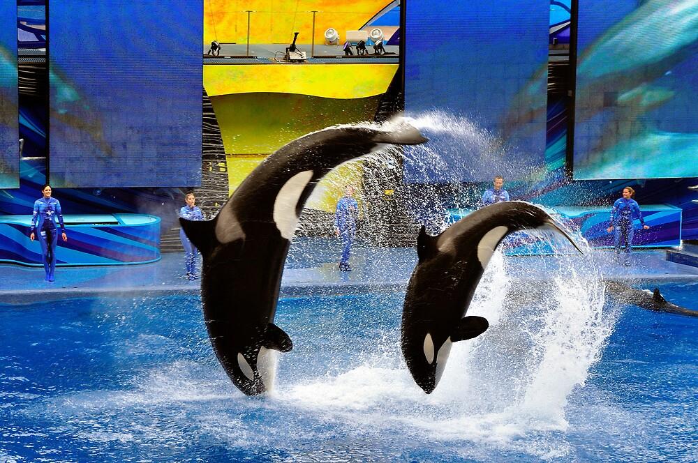 Sea World, Orlando, Florida by fauselr