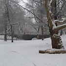 Central Park Snow 3 by WhiteDiamond