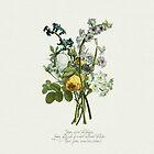 The Perks... - flower case by novillust