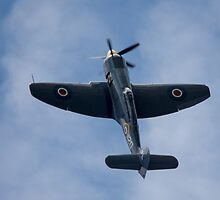 Hawker Sea Fury by Cliff Williams