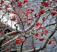 RED Flowers by Haz Preena