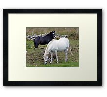 Connemara Pony Mare and Foal Framed Print