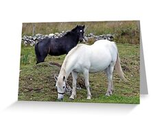 Connemara Pony Mare and Foal Greeting Card