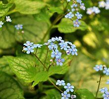 BLUE flowers by Haz Preena
