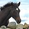 Connemara Pony Foal looking over a stone wall by ConnemaraPony