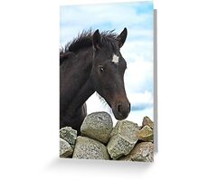 Connemara Pony Foal looking over a stone wall Greeting Card