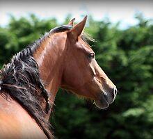Connemara Pony Mare by ConnemaraPony