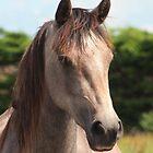 Golden Connemara Pony Mare by ConnemaraPony