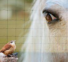 I've got my eye on you! by Bonnie T.  Barry