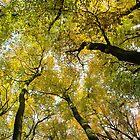 Autumn Gold by KUJO-Photo