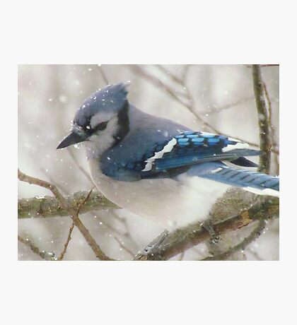 A Blue Gray Day Photographic Print