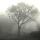 Tree in the Fog by NAH Photography