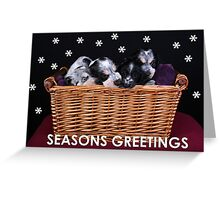 Cocker Spaniel Christmas Cards Greeting Card