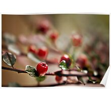 autumn berries.. Poster