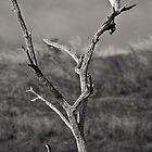 Cormorant and Great Egret by Adrian Park