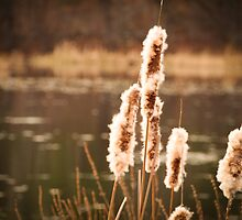 Cattail Fluff by Linda  Makiej
