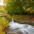 Cymcarn Forest, South Wales by Ciaran Sidwell