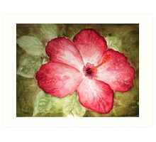 Pretty Hibiscus  Art Print