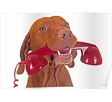 dog with red phone Poster