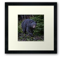 So, You've Never Seen A Bear Naked In The Woods? Framed Print