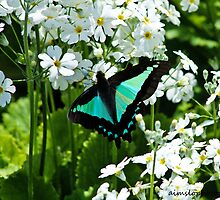Butterfly Resting by -aimslo-