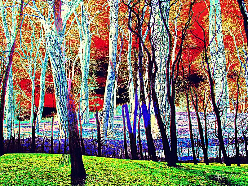Autumn Sun by David Schroeder