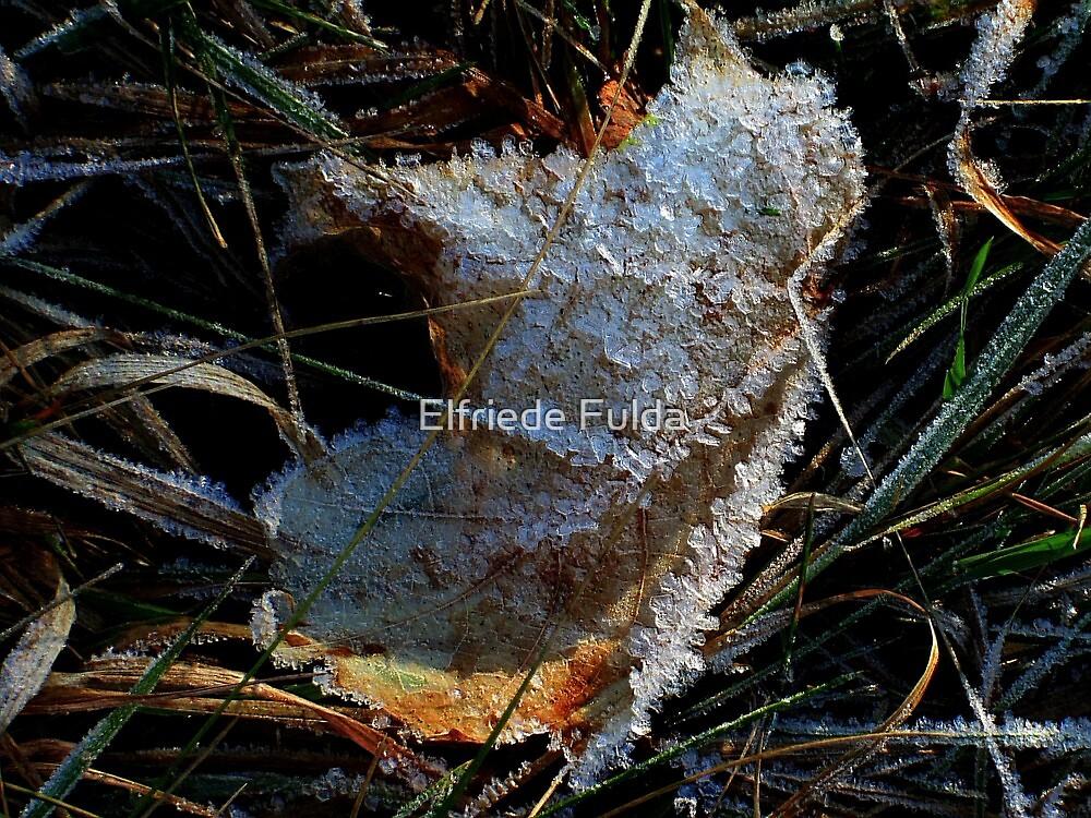 Frosted ! by Elfriede Fulda