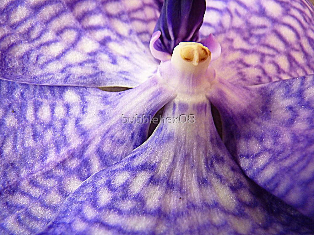 Lady Vanda - orchid bloom resembling a Venetian mask by bubblehex08