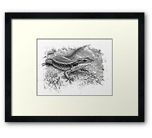 Eastern Water Skink.. Framed Print