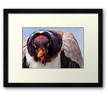 King Vulture trying to intimidate me (with a special shoutout to Steve Randall) Framed Print