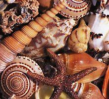 Sea Shell iPhone case by Jnhamilt