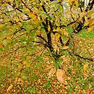 colourful tree by davvi