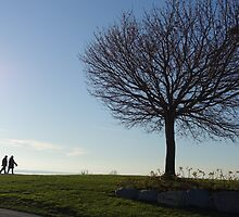 Tree, couple walking by Crescent Beach in White Rock, BC by naturematters